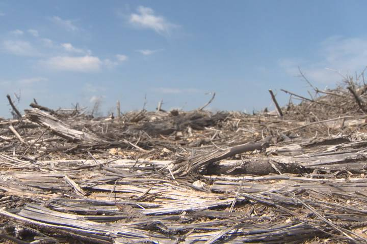 Report finding old-forest cut indicates need for reform in Nova Scotia: critic - image
