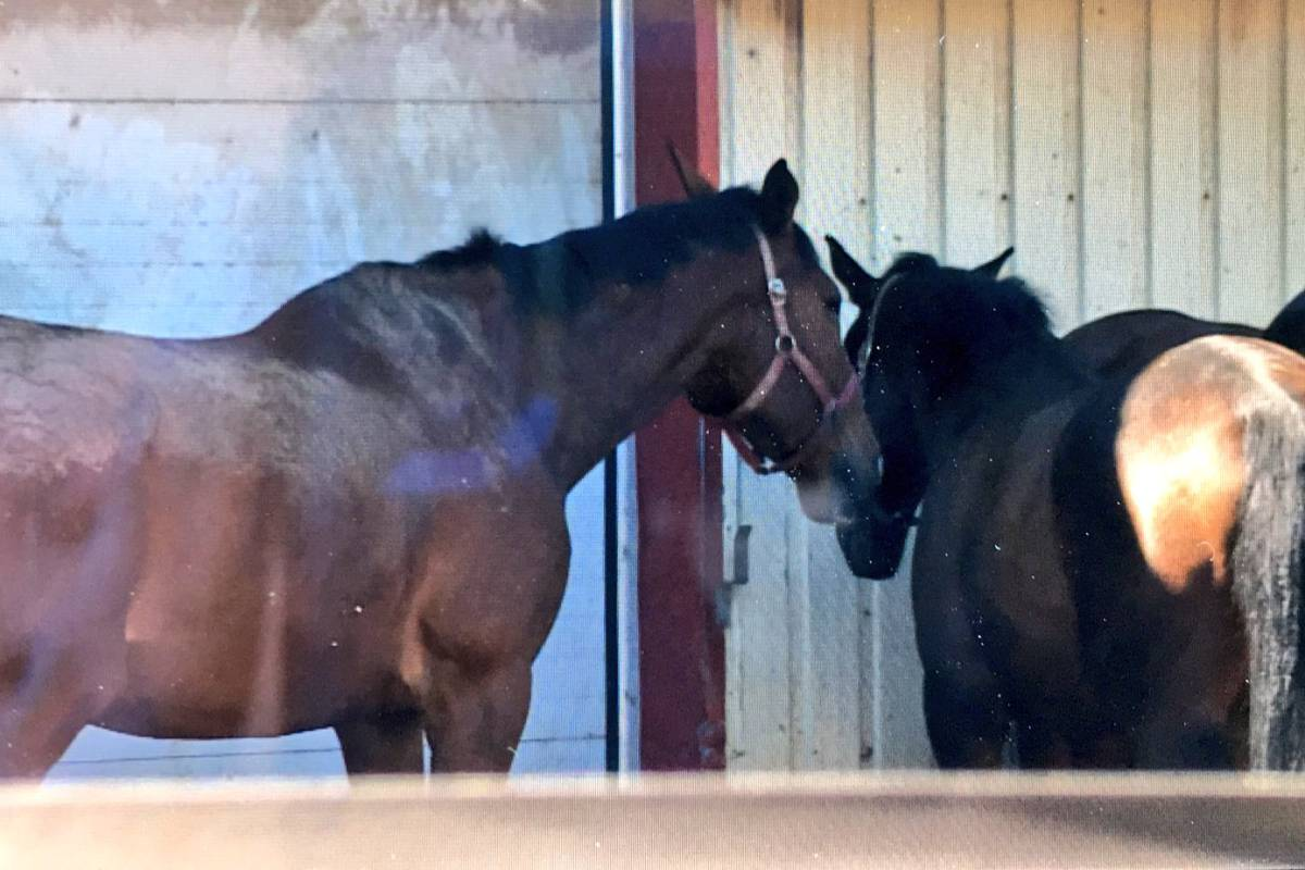 The Halifax Junior Bengal Lancers were forced to place its horses in quarantine after a few of the animals contracted the highly-contagious respiratory infection known as strangles.