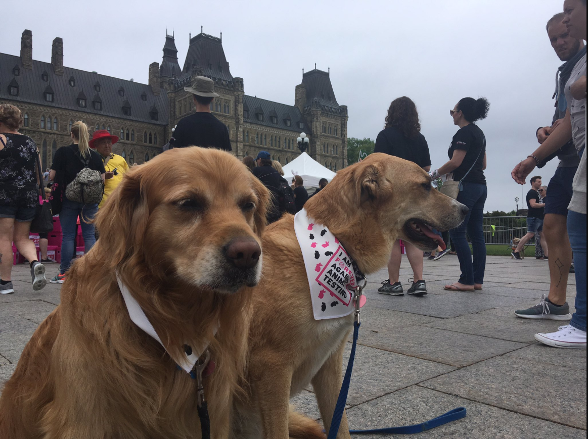 Animal rights advocates gathered alongside parliamentarians on Centre Block on Monday to demand an end to the testing of cosmetics on animals.