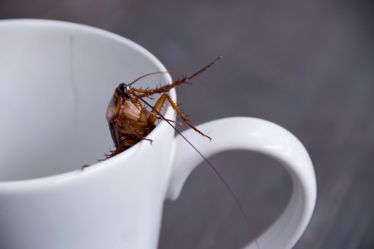 People are already using entomilk, or insect milk, to make things like ice cream. Here's why cockroaches could be the next big food trend.