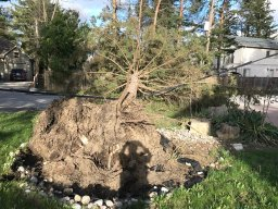 Continue reading: Ontario's May wind storm created $380M in damage: Insurance Bureau of Canada