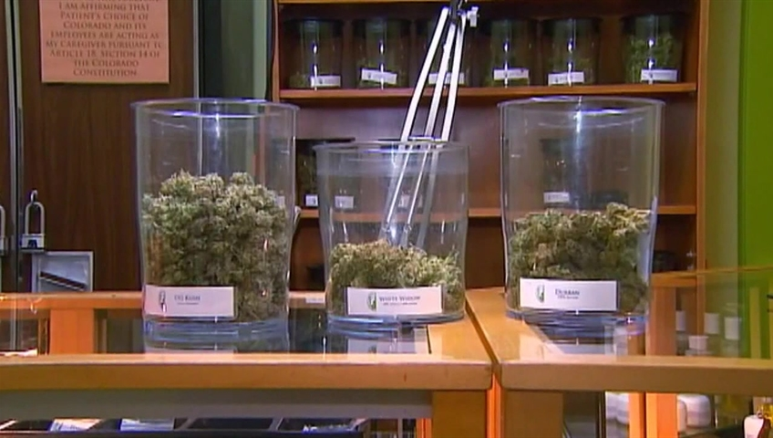 Bowls of marijuana at a pot shop.
