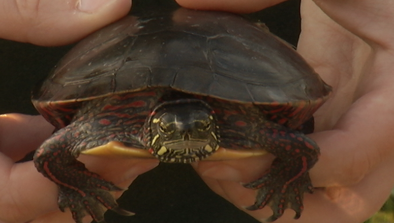 The Ontario Turtle Conservation Centre in Peterborough is one of four projects receiving new provincial funding.
