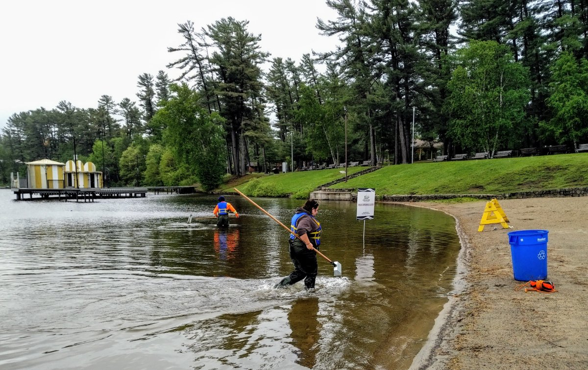 Staff from the town of Gravenhurst conduct enhanced sweeps to ensure the beach is free of hazardous materials.