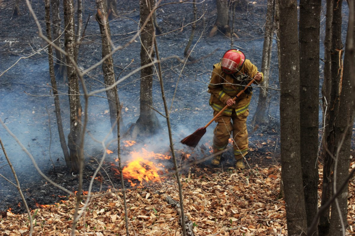 At the time of the report, there were 61 forest fires in Quebec, 31 of which were in intensive protection zones. File photo.