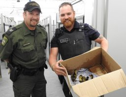 Continue reading: Ducklings saved by Canada Border Services officer