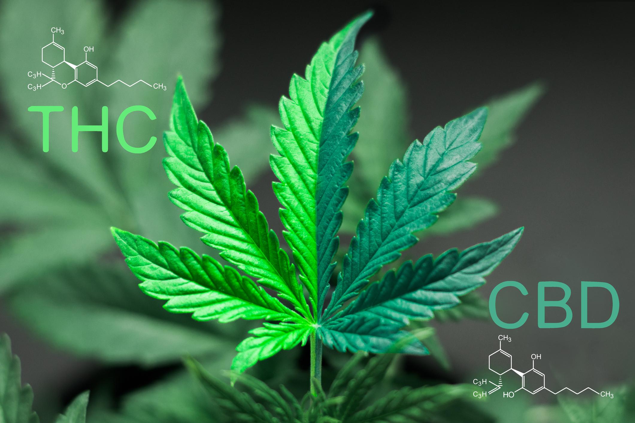 Buy cannabis Saskatoon