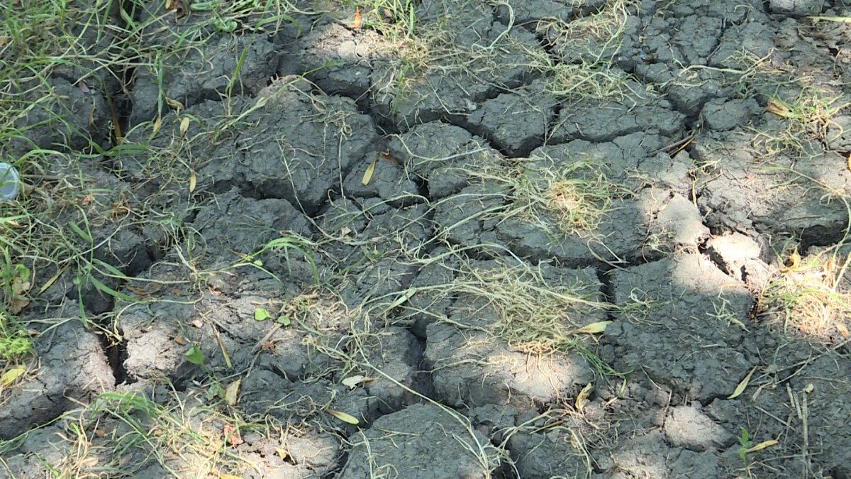 Several regions of B.C. have had their drought level raised to B.C.'s highest rating.