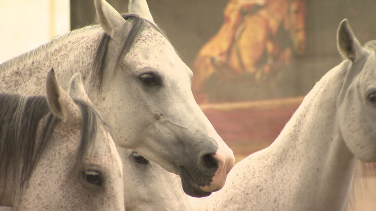 Odysseo is trotting through Montreal starting July 25.