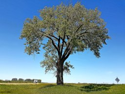 Continue reading: You are Here: Landmark tree hails Manitoba halfway point