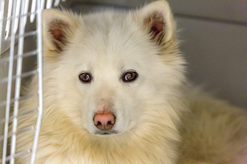 One of 46 neglected dogs in severe psychological distress seized from a Williams Lake man.