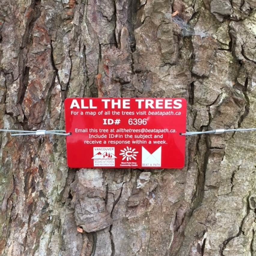 If you were to email a tree in your neighbourhood, what would you say?.