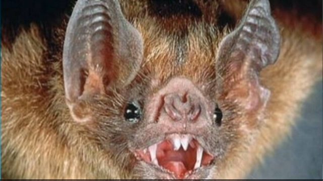 A woman in central Ontario was bitten by a bat which tested positive for rabies.