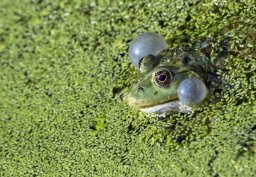 Continue reading: The day it rained frogs in Calgary