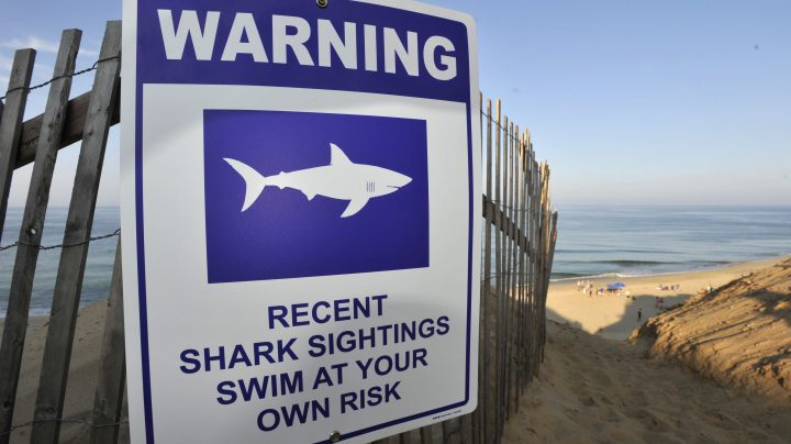 A sign warns visitors to Long Nook Beach of recent shark sightings, Wednesday, Aug. 15, 2018 in Truro, Mass.
