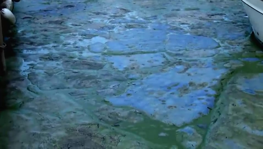 The city is advising to avoid swimming in Lake Micmac after blue-green algae blooms have been detected.