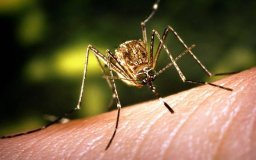 Continue reading: Edmonton anticipates fewer mosquitoes this year after dry winter, spring
