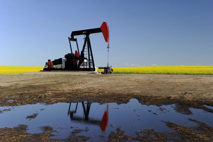 An oilfield pumpjack, owned by Husky Oil, works pumping crude oil beside a field of blooming canola near Vulcan, Alberta.