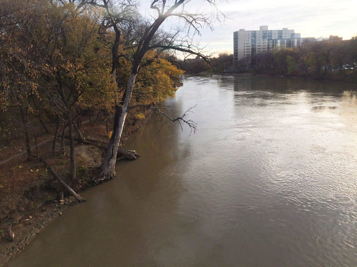 Trees lean over the Assiniboine River in Winnipeg on Oct. 14, 2016. Canoeist David Danyluk doesn't live far from Winnipeg's Assiniboine River but he tends to spend more time paddling further afield. That's because he doesn't want to risk gliding through the sewage that regularly makes its way into Winnipeg's river system.