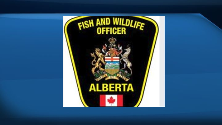 A file photo of an Alberta Fish and Wildlife badge.