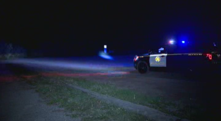 Police search for a bear in southwest Calgary Sunday night.
