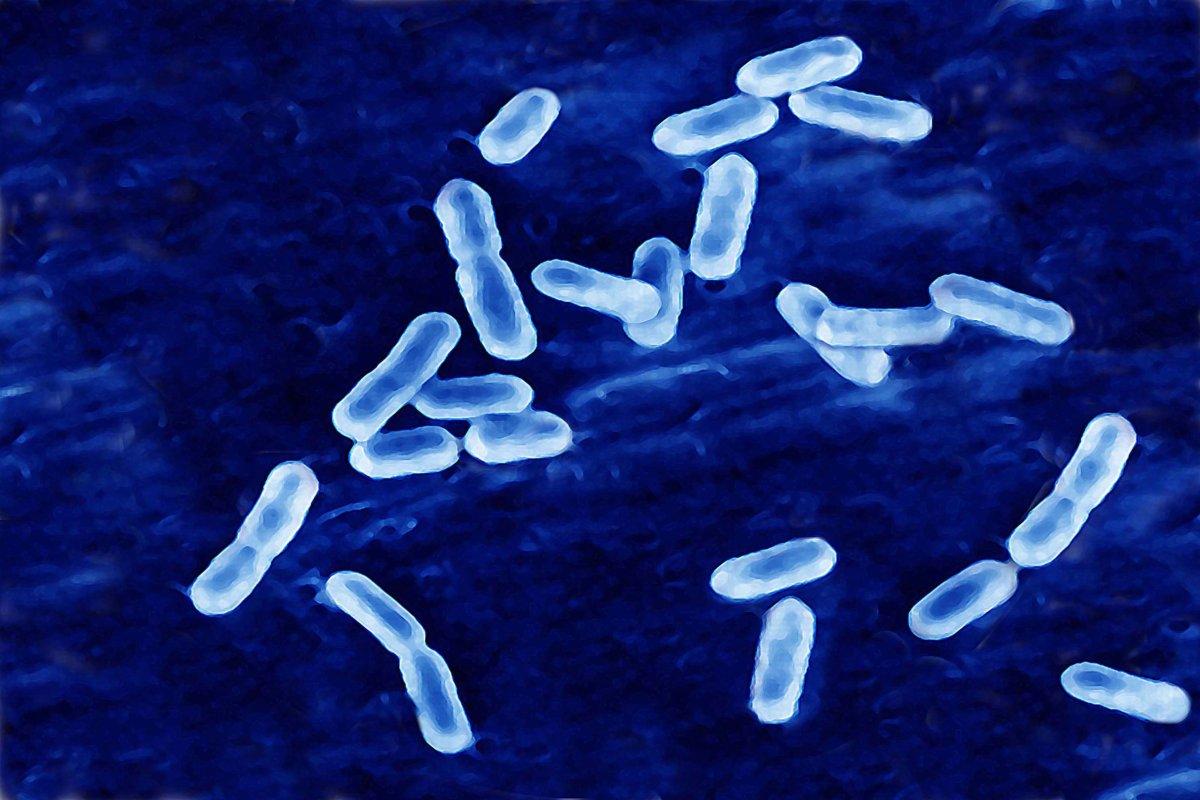 Listeria Monocytogenes causes Listeria infection.