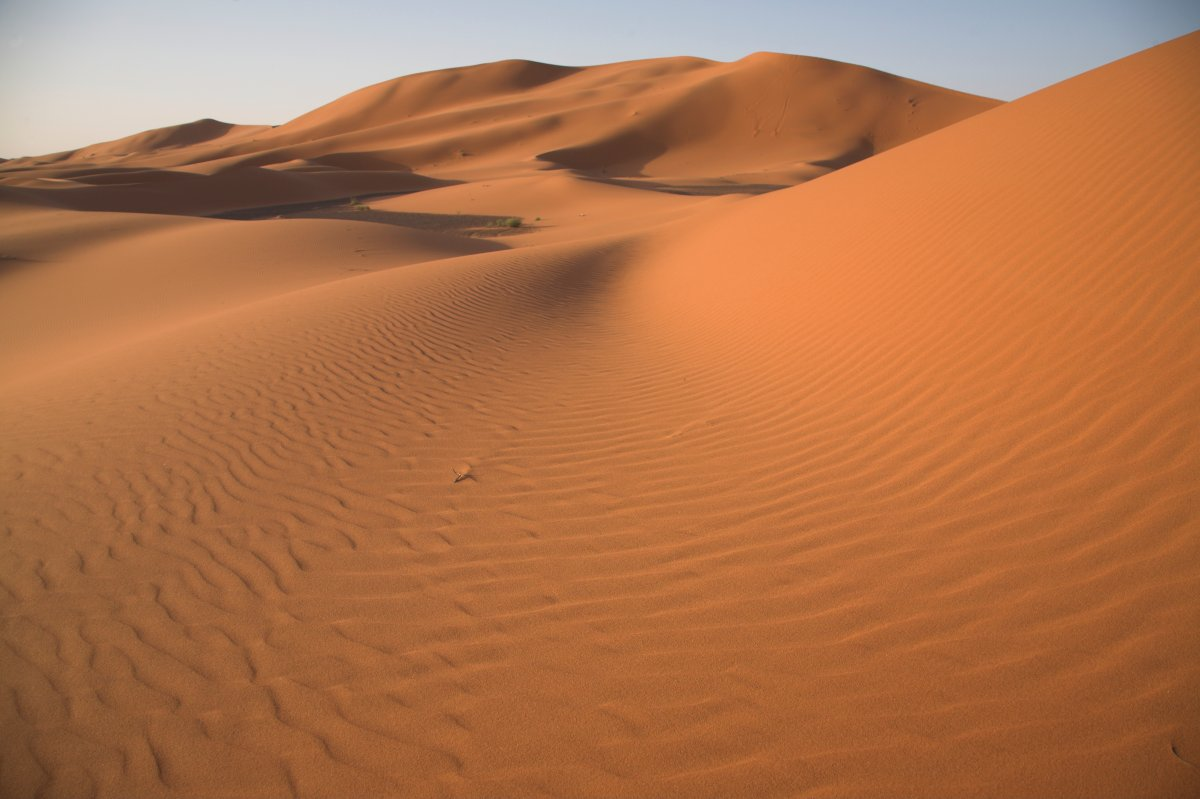 Camel trekking through the sand dunes of the Sahara desert near Merzouga, Morocco.