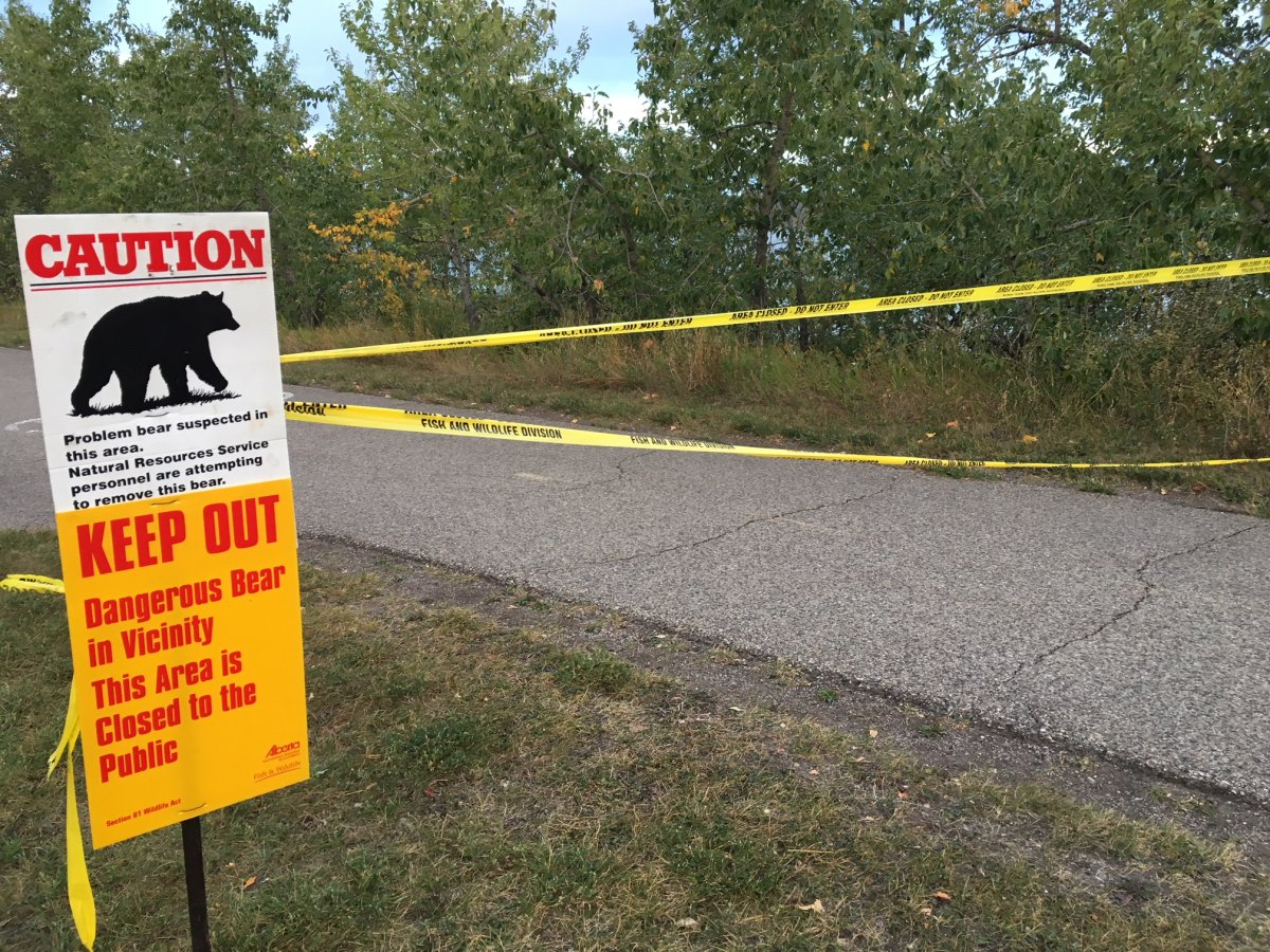 Calgary's Glenmore Trail was closed due a report of a bear in the area.