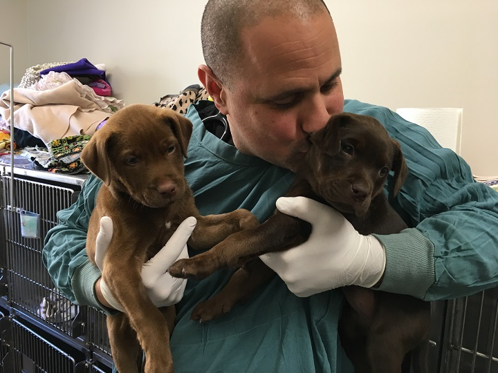 A employee of a veterinary clinic in West Kelowna holds a group of puppies treated for parvovirus in September, 2018.