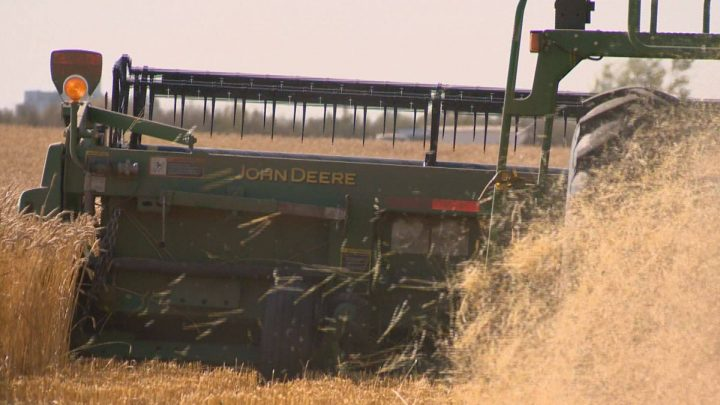 Saskatchewan Agriculture said 99 per cent of the crop is combined, with yields on par with the 10-year average.