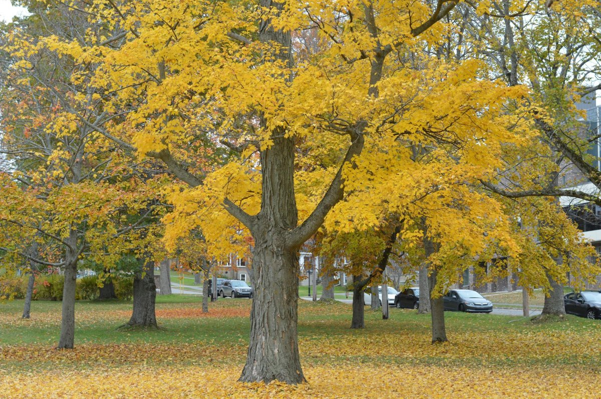 Canada's leading conservation group is asking people not to rake their lawn.