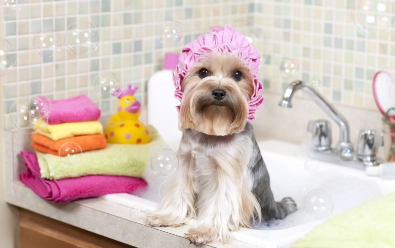 Hamilton among Canadian cities with Most Pampered Pets, according to Amazon.ca.