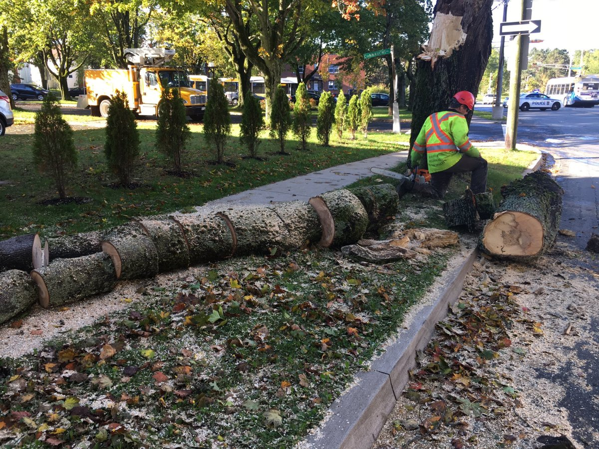Staff with the Halifax Regional Municipality dispose of a downed tree on Oct. 16, 2018.