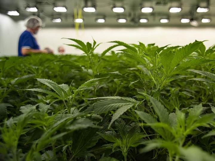 A ground-breaking ceremony will take place in Kelowna on Thursday afternoon for a 50,000 square-foot cannabis research and development facility.