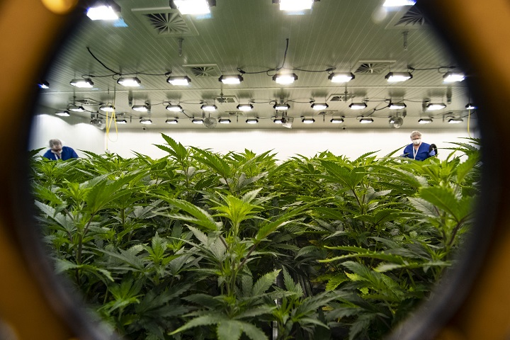 A view of Flowr Corporation's grow operations in Kelowna. On Wednesday, it becomes legal to consume cannabis in Canada.