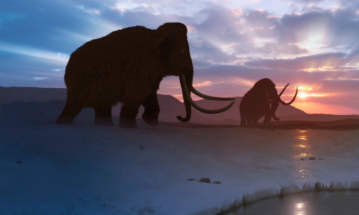 Artwork of the woolly mammoth (Mammuthus primigenius), or tundra mammoth. This animal lived during the Pleistocene epoch and into the early Holocene, and as such coexisted with humans.