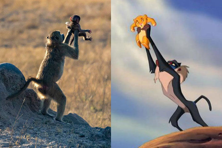 Israeli photographer Dafna Ben Nun captured the scene during a recent trip to Zimbabwe.