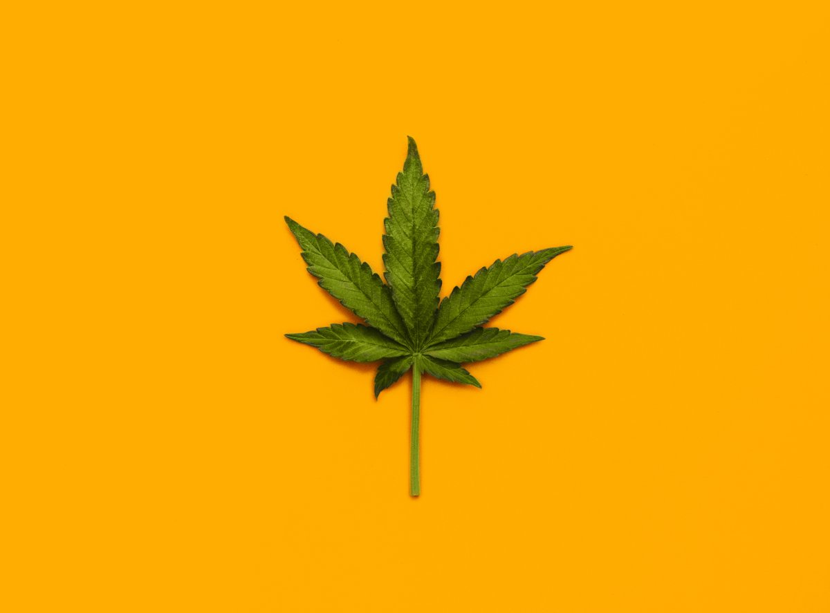 Western University research team is solving why psychological experiences of marijuana may be different between individuals.