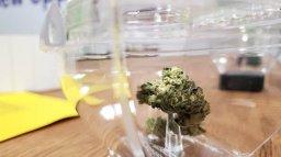Continue reading: Regina city council votes down cannabis moratorium bylaw