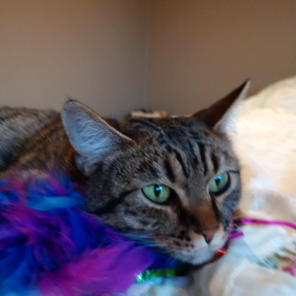 A cat that was found with duct tape around its face in Burlington last month, has a new home.
