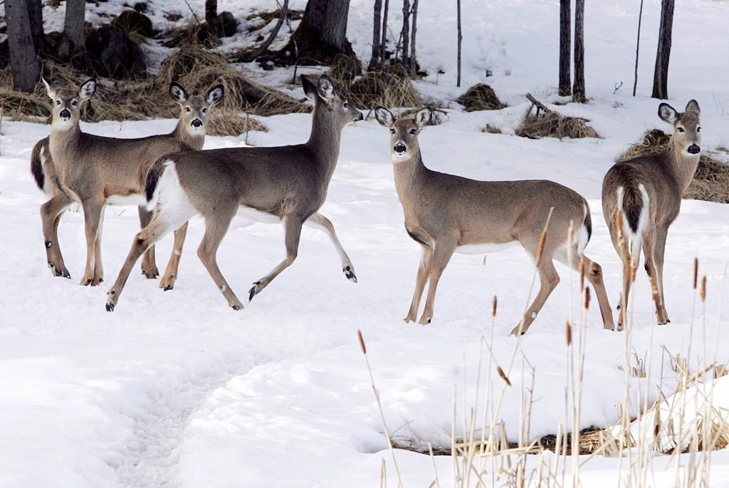 The MNRF are investigating the shooting of deer on private property in Hastings County.