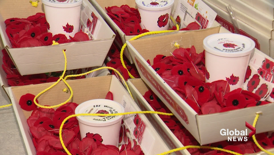 Man arrested after poppy donation box stolen in Scarborough - image