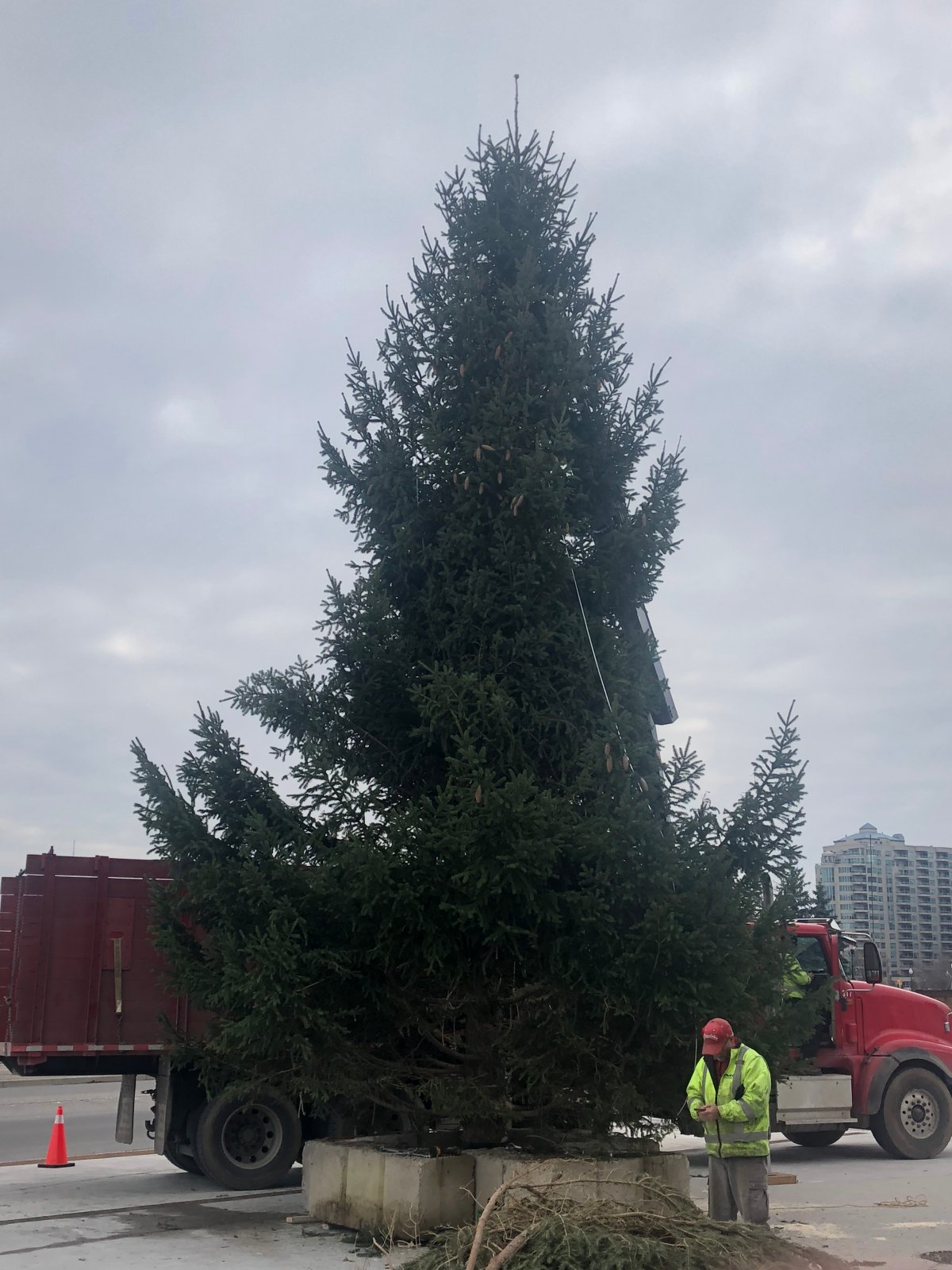 Meridian Place's 30-foot-tall Christmas tree will be lit up this Saturday, Nov. 17.