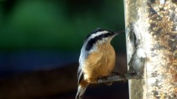 Continue reading: Canadians love birding: Tips for feeding feathered friends in winter
