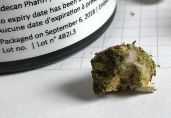 Reddit user n1shh posted this photo of apparently mouldy cannabis purchased from RedeCan last week.