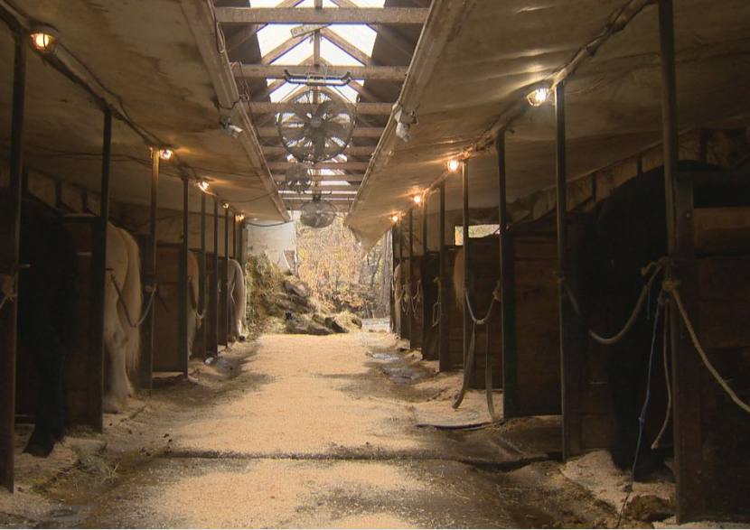 File photo of horse stables in Montreal.