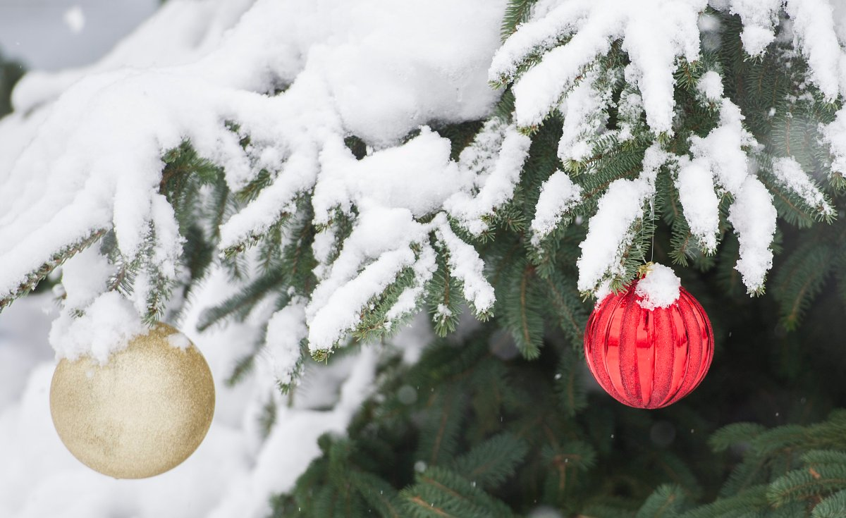 Ornaments hang on a snow covered tree in Montreal, December 24, 2016.