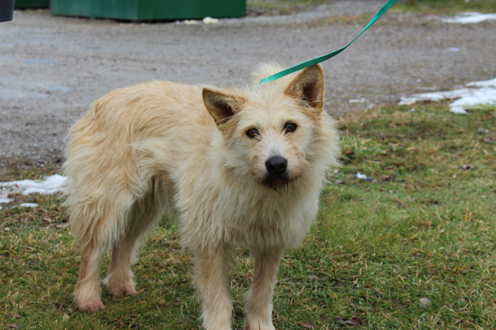 According to the release, 27 dogs have been transferred from Cat Lake First Nation.