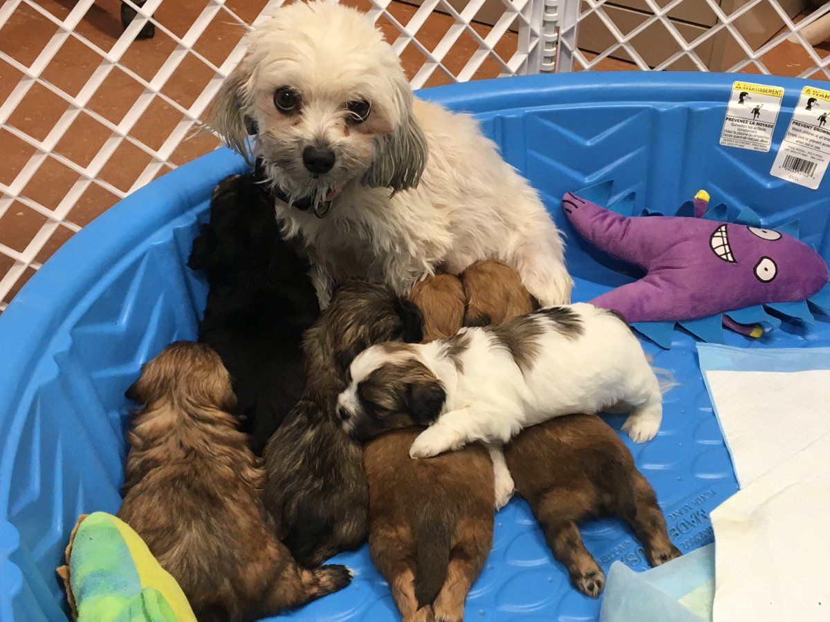 Among the animals surrendered was a nursing mother and her six puppies.