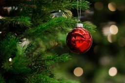 Continue reading: London Christmas tree curbside pickup returns for one day only